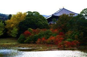 大仏池の紅葉