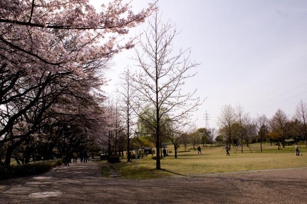 大野極楽寺公園のサクラと広場