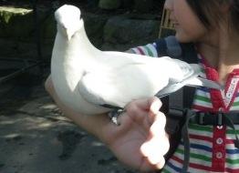 手の上の鳥