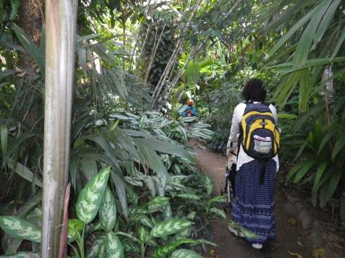 ケアンズ植物園
