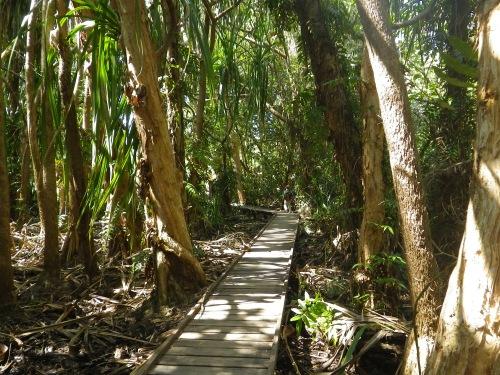 ケアンズ植物園湿地林