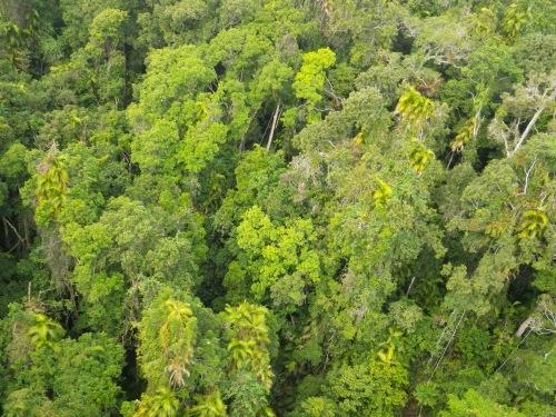 ケアンズ近くの熱帯降雨林