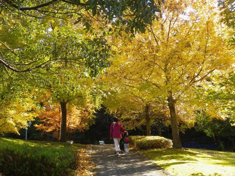 岐阜ファミリーパークの黄葉