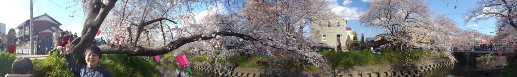 五条川の桜祭り