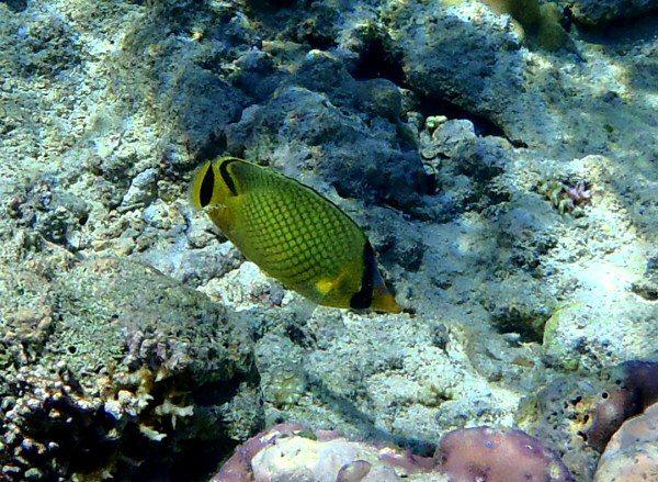 バリ島の魚