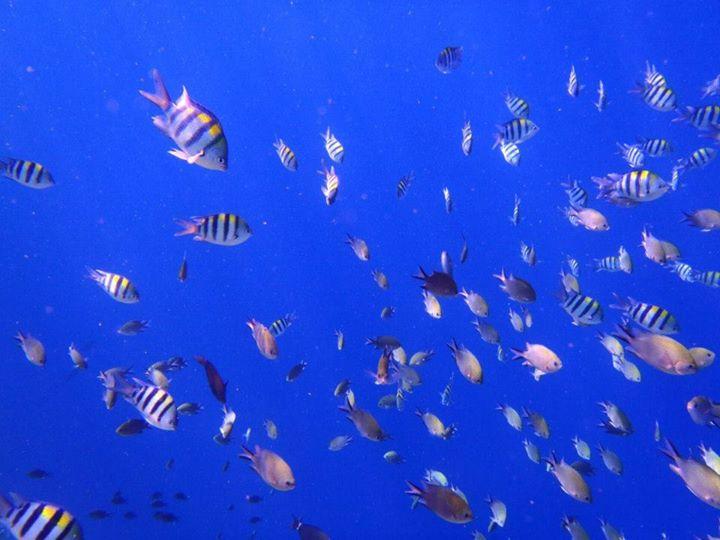 ドロップオフに群れる魚