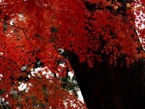 宗廟の紅葉